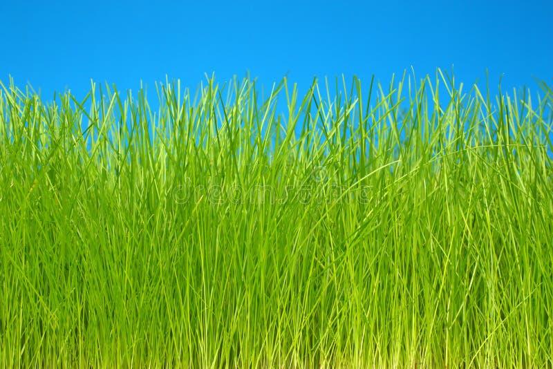 sky för green för gräs för bakgrundseco vänlig royaltyfri bild