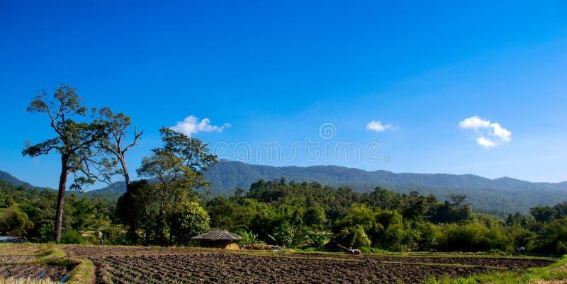 sky för liggande för bakgrundsfältgräs royaltyfria bilder