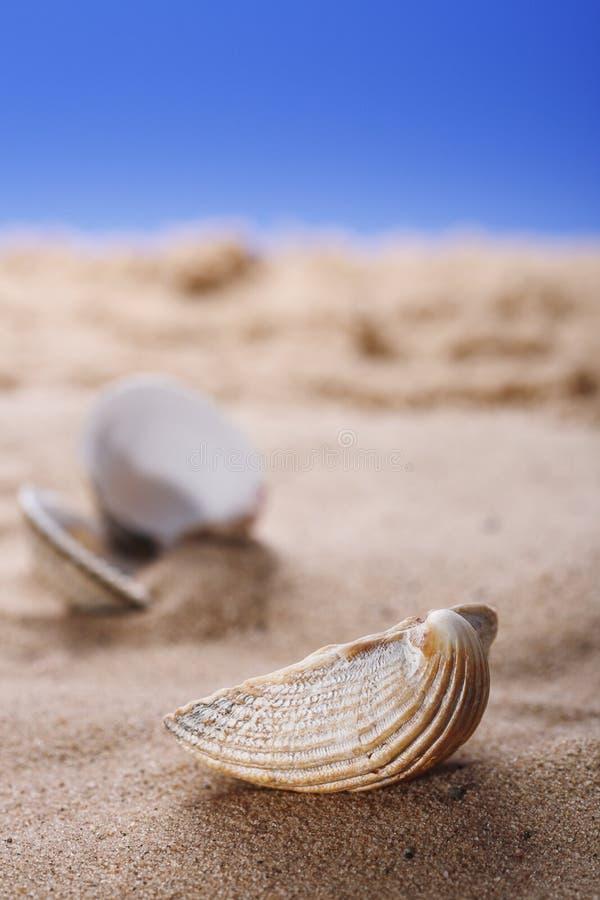 sky för skal för hav för sand för bakgrundsstrand blå arkivfoton