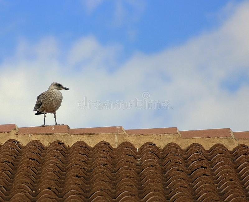 Sky, Fauna, Bird, Seabird Free Public Domain Cc0 Image