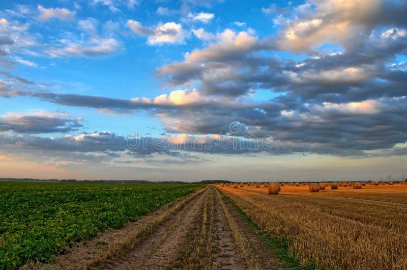 Sky, Field, Cloud, Crop stock images