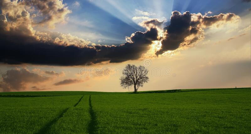 Sky, Field, Cloud, Grassland royalty free stock image