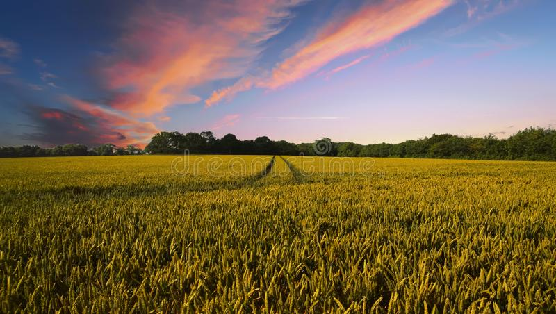 Sky, Field, Crop, Agriculture royalty free stock photos