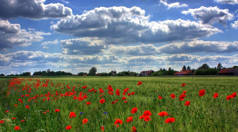 Sky, Field, Ecosystem, Flower stock images
