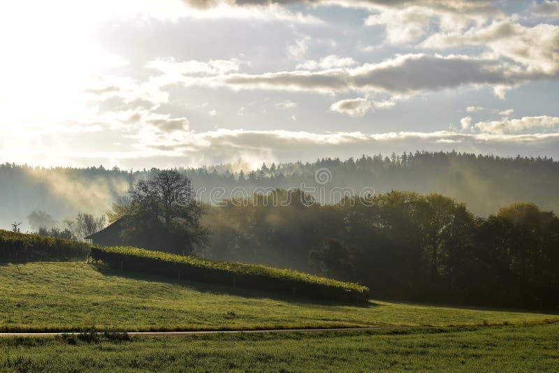 Sky, Field, Morning, Grassland royalty free stock photos
