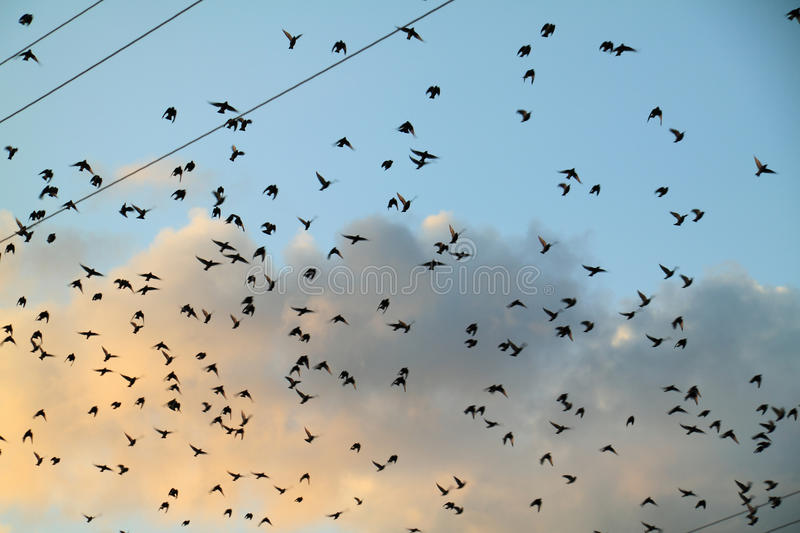Sky Filled With Flying Royalty Free Stock Photos