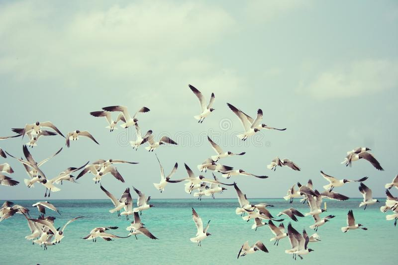 Sky, Flock, Water, Bird stock image
