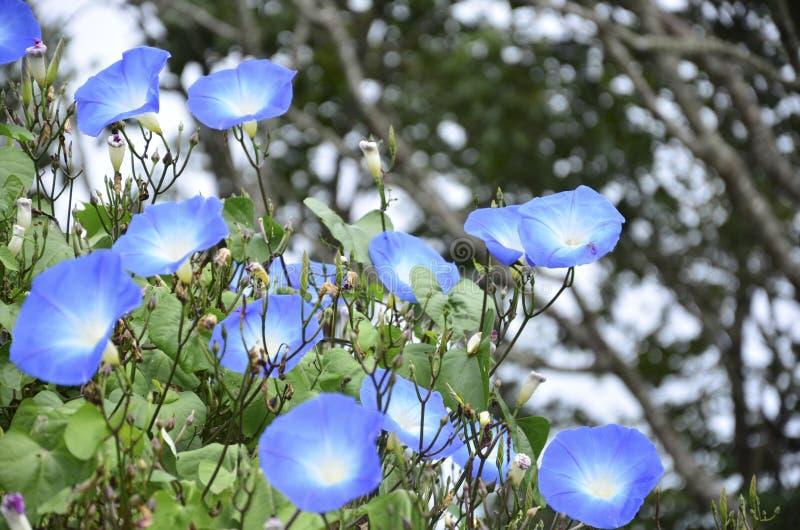 Sky Flower stock image