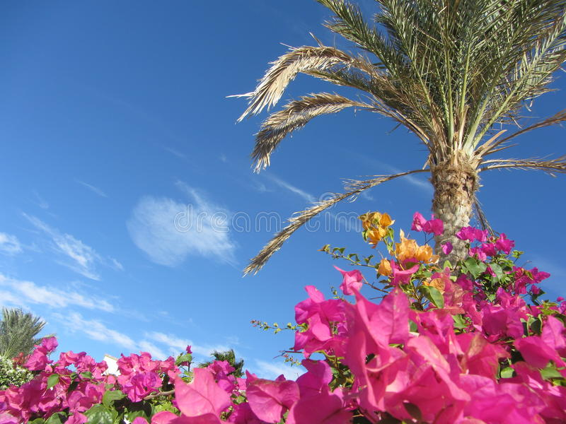 Sky, flowers and Palma royalty free stock images