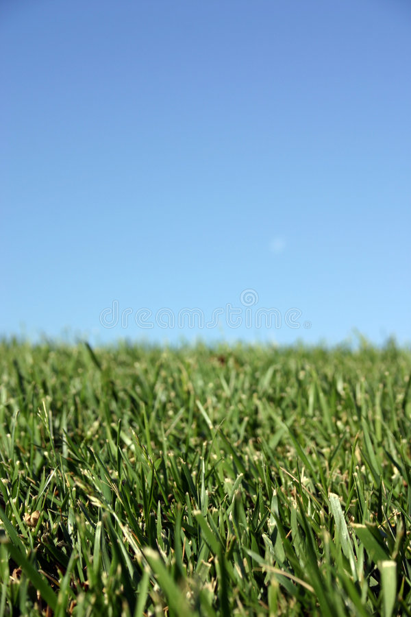 Download Sky Grass stock photo. Image of lawn, grass, nature, environmentalism - 6084