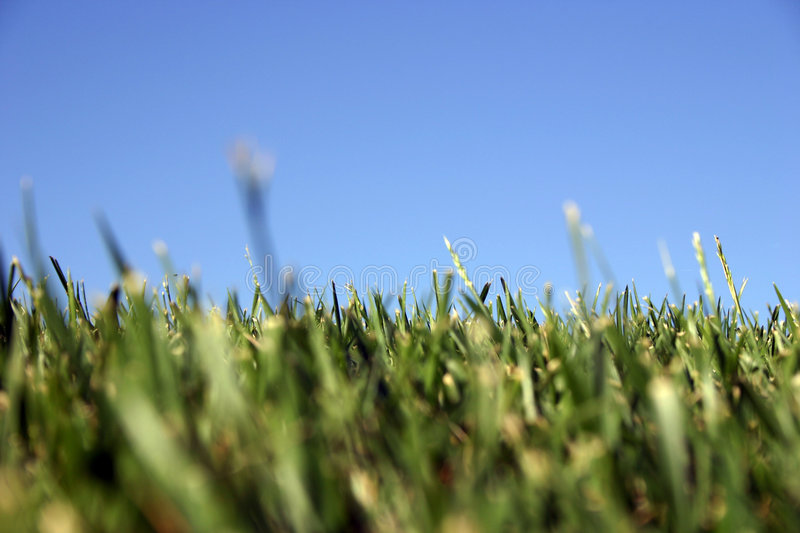 Download Sky Grass stock photo. Image of green, blue, grass, lawn - 6086