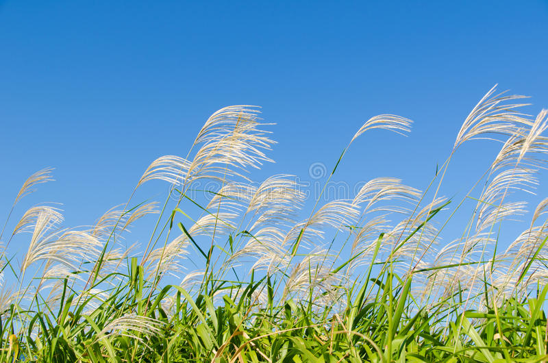 Download Sky and grass in autumn stock image. Image of october - 34341257