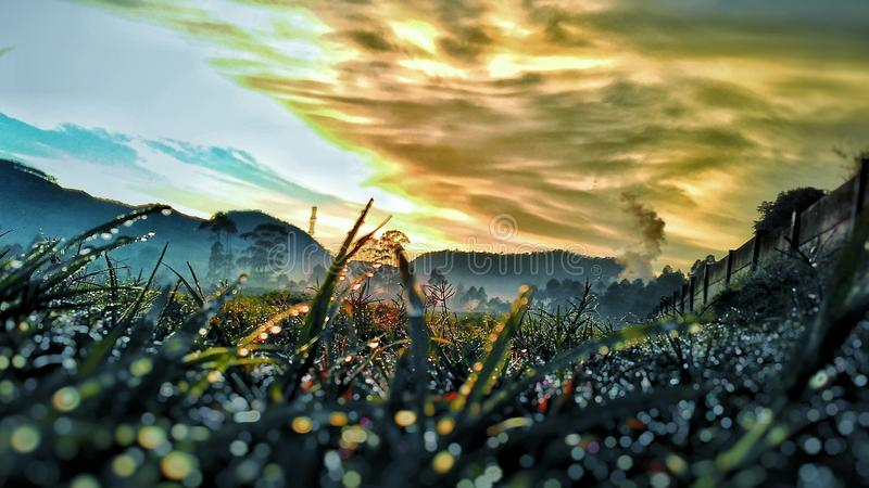 Sky, Grass, and Dews stock images