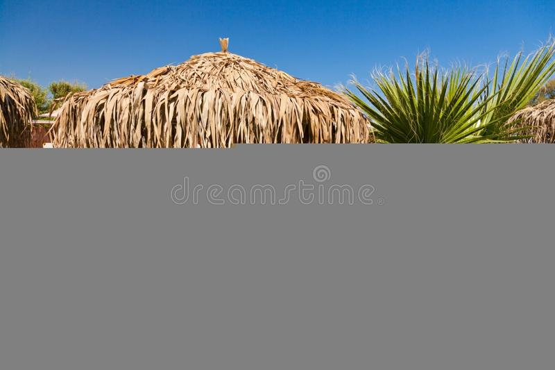 Sky, Grass, Grass Family, Arecales royalty free stock photography