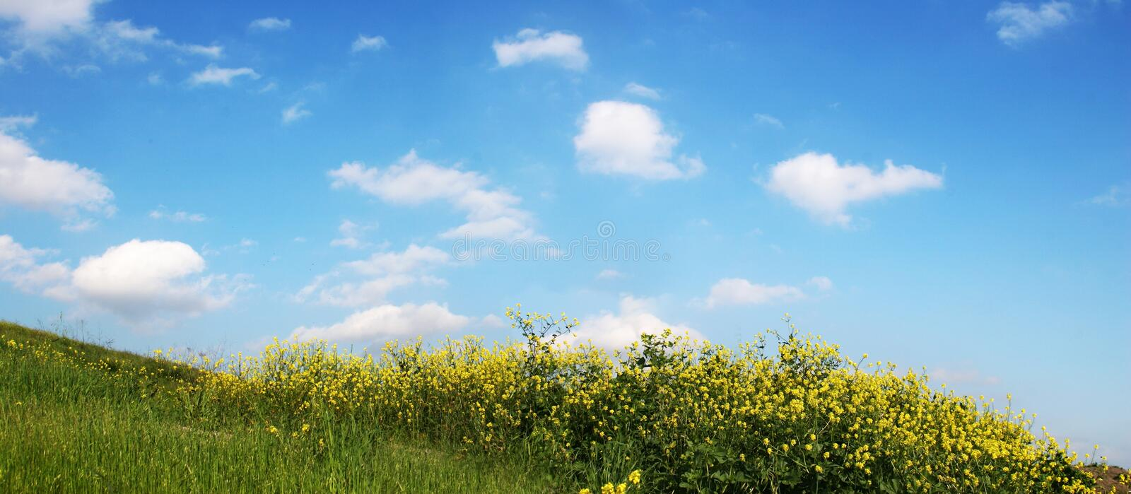 Sky And Grass - wide view royalty free stock images