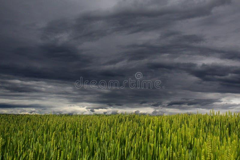 Sky, Grassland, Field, Ecosystem stock image