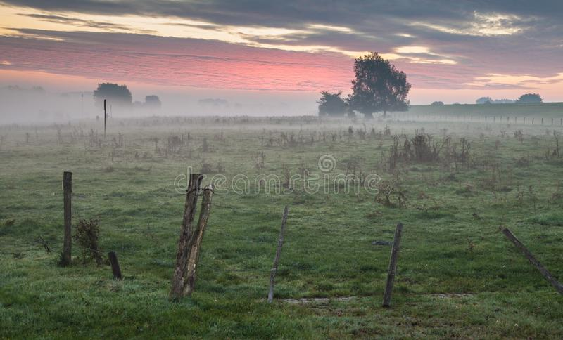 Sky, Grassland, Morning, Tree royalty free stock photos