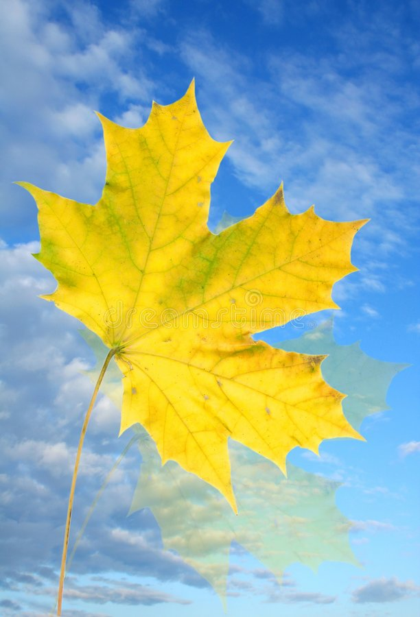 Sky and leaf royalty free stock image
