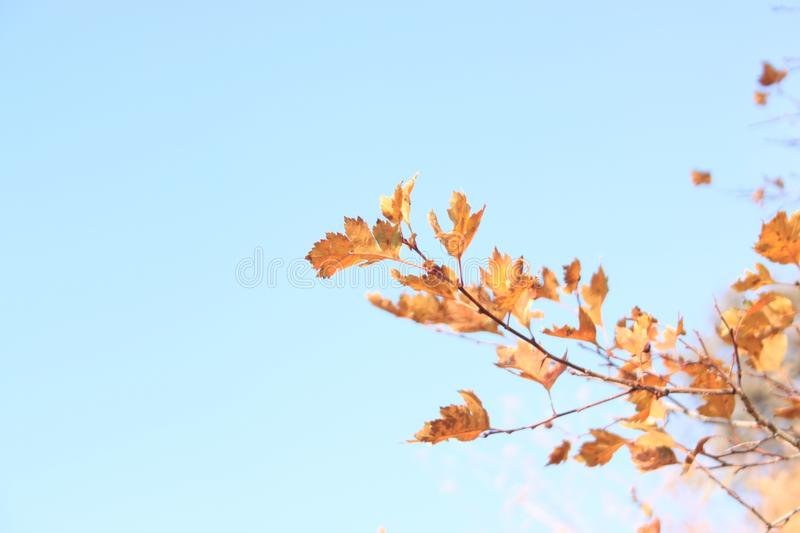 Sky, Leaf, Branch, Tree Free Public Domain Cc0 Image