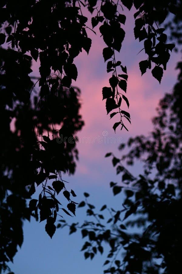 Sky, Leaf, Nature, Branch Free Public Domain Cc0 Image