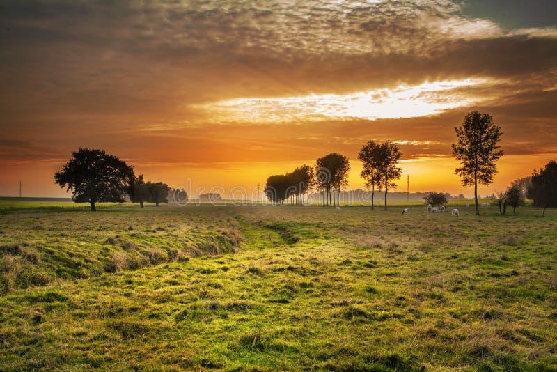 Sky, Nature, Grassland, Field stock image
