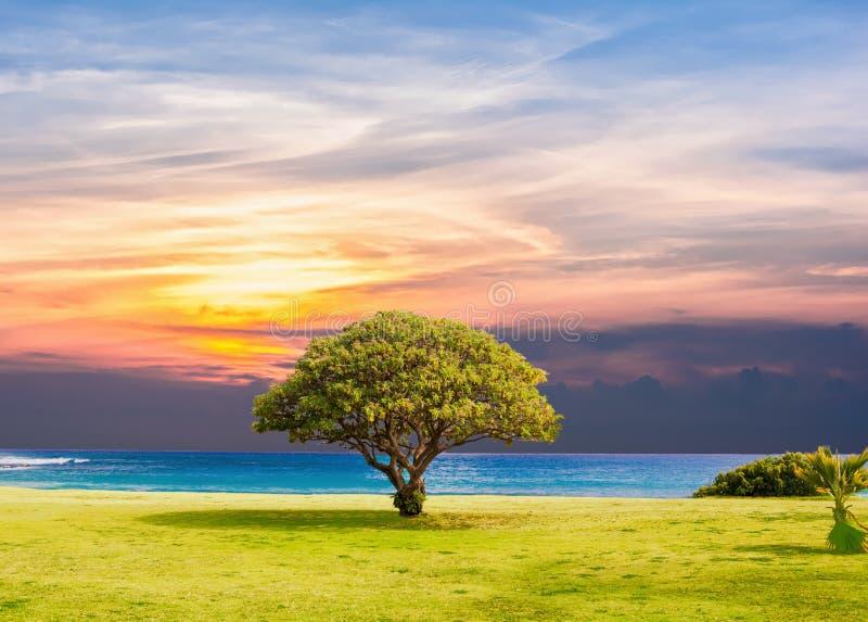 Sky, Nature, Tree, Morning stock photo