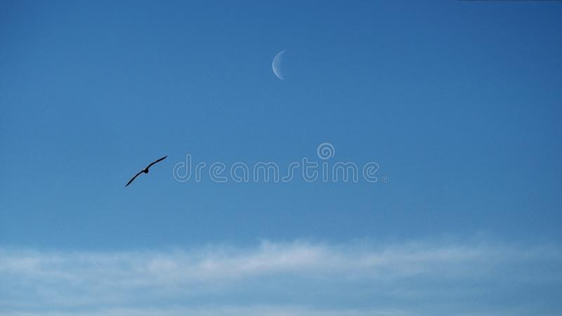 Moon clouds and birds observing on blue ksy royalty free stock image