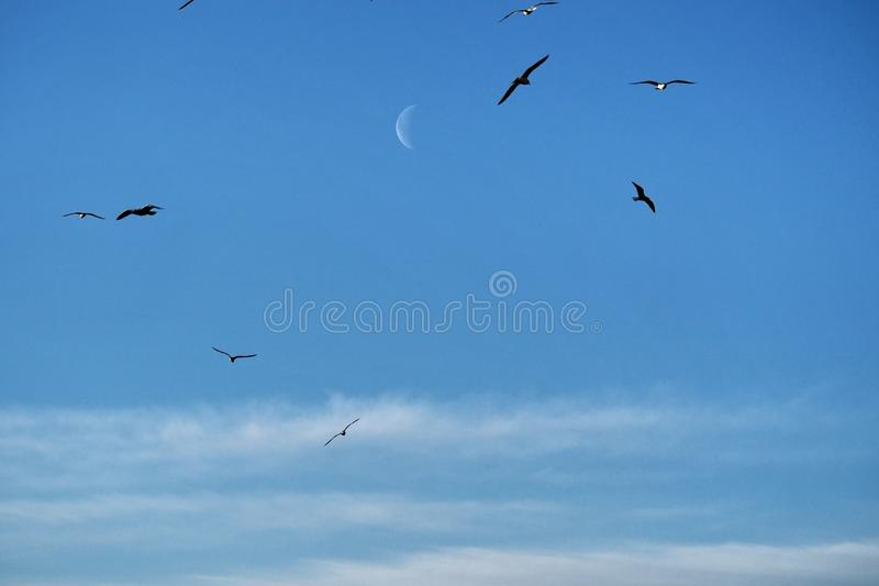 Moon clouds and birds observing on blue ksy royalty free stock photo