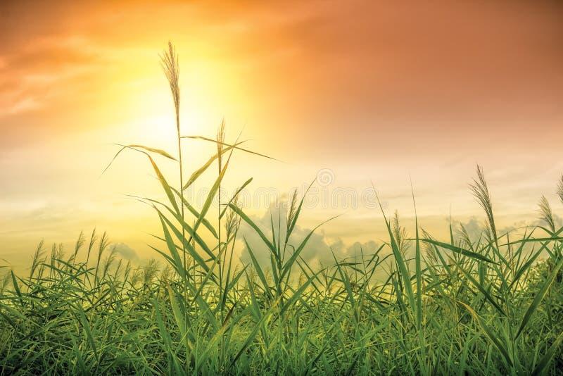 Sky och gräs royaltyfria foton
