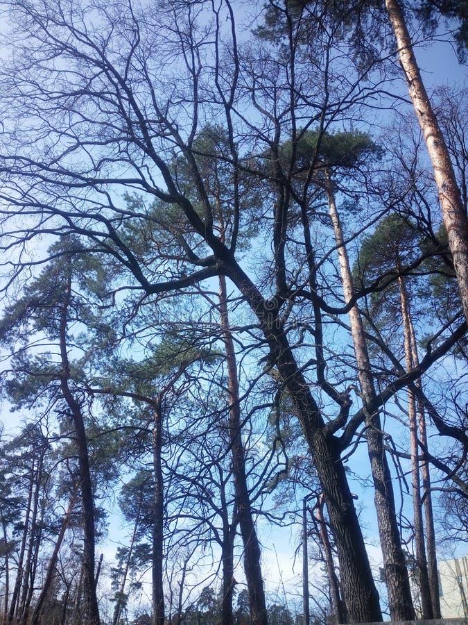 Sky och Trees arkivbild