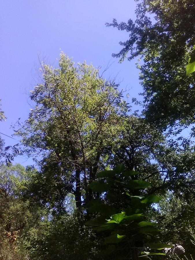 Sky och Trees royaltyfri fotografi