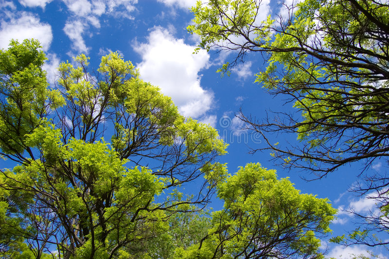 Sky opening between branches. Sky opening between fresh green branches royalty free stock photos