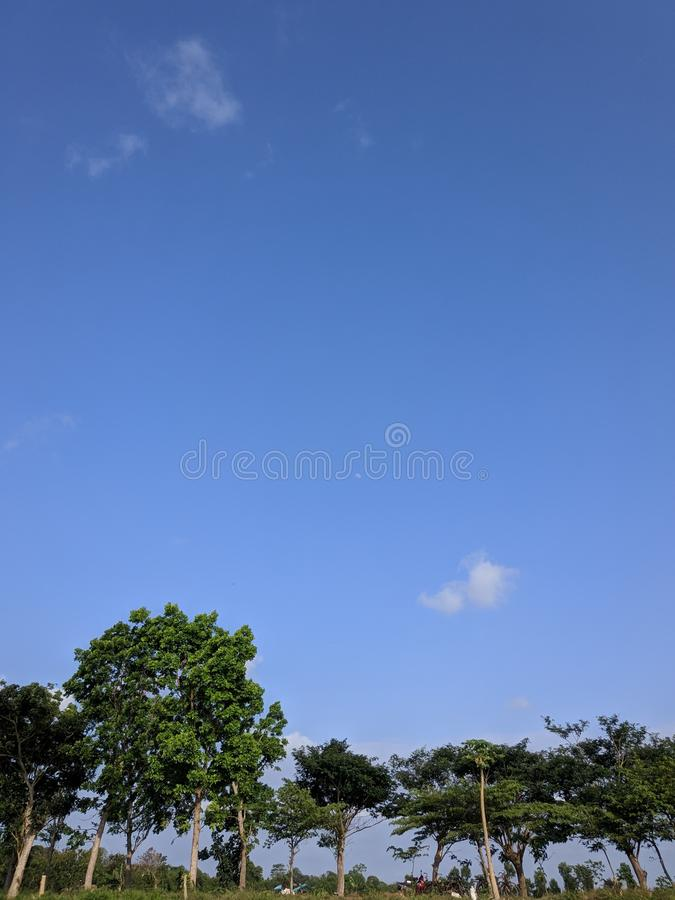 Sky over the trees. Clear blue sky in the middle of the day royalty free stock photography