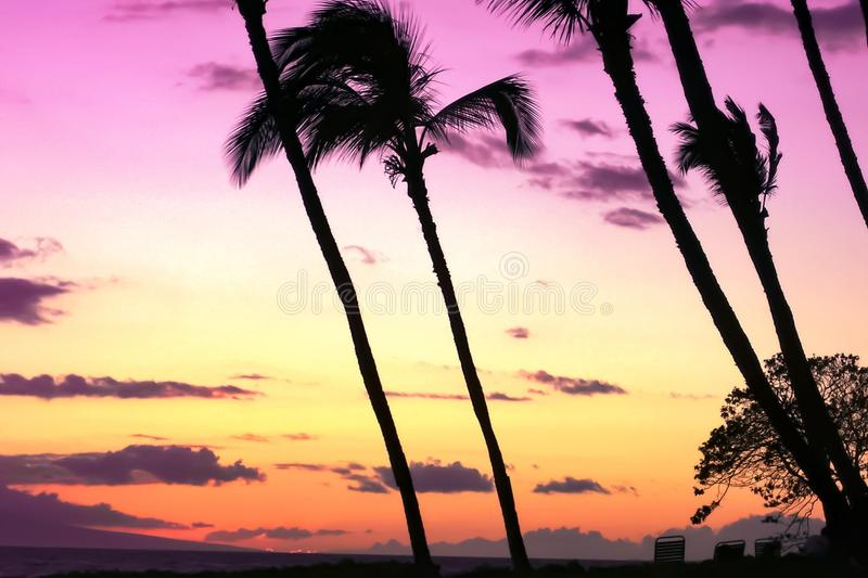 Sky, Palm Tree, Sunset, Arecales stock photos
