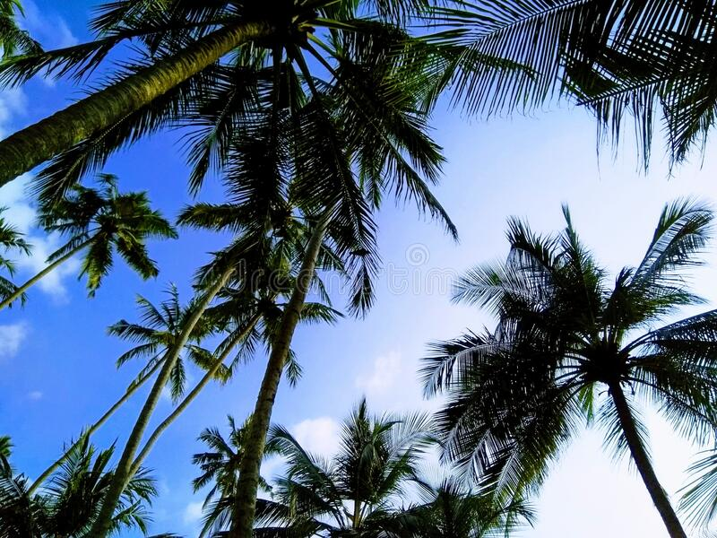 Sky with palm trees on the beach in Sri Lanka near the hotel. royalty free stock image