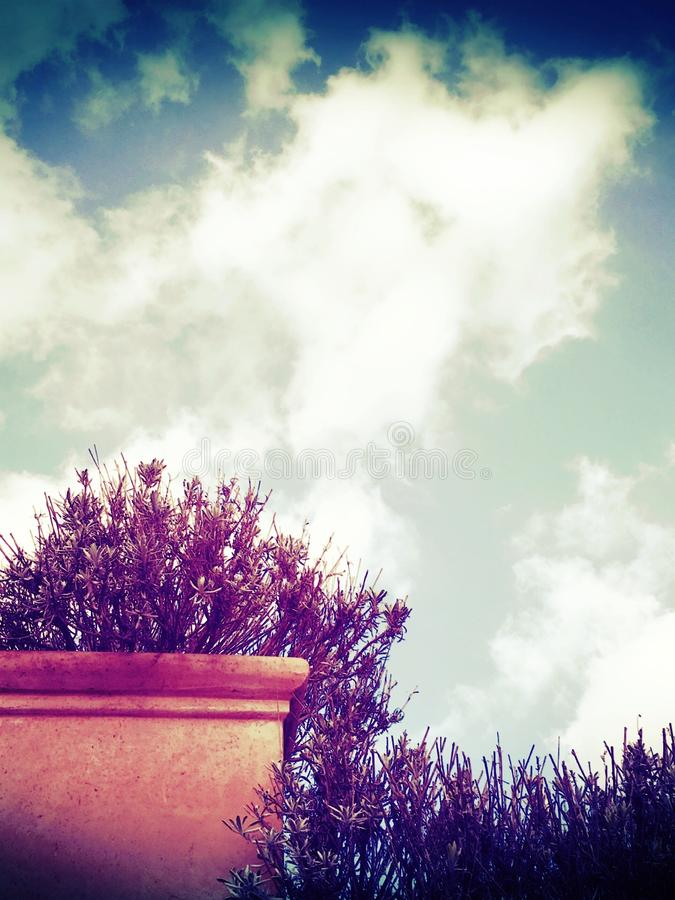 Sky and plant stock photography