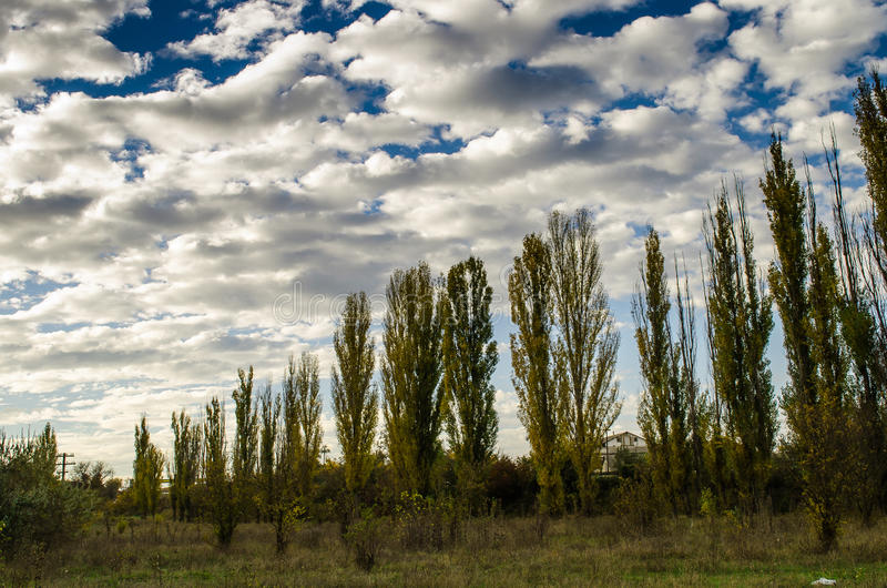 Download Sky and poplar stock photo. Image of yellow, flora, trees - 35159000