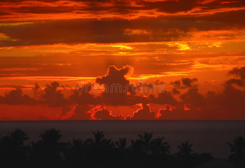 Download Sky says bye-bye stock image. Image of palm, evening, yellow - 6277503