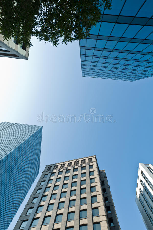 Sky scraper. And a green tree under blue sky royalty free stock images
