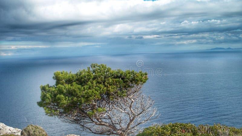 Beatiful tree royalty free stock photo