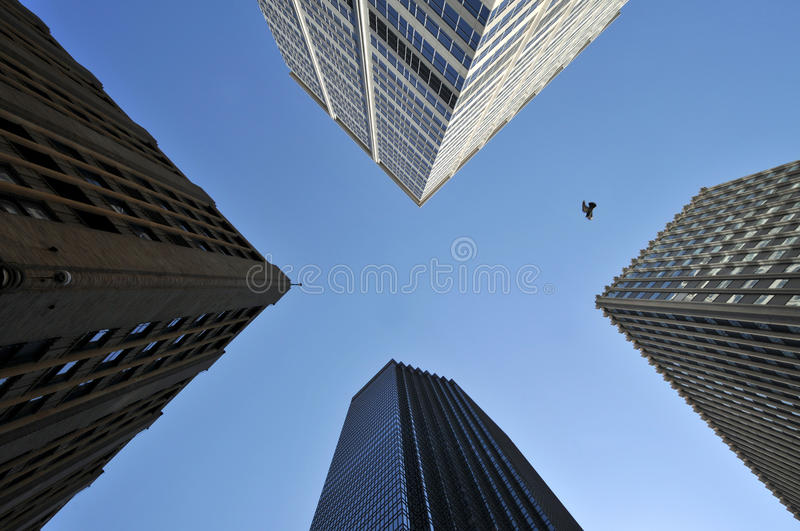 Sky between skyscrapers, with bird. X-shaped slice of blue sky is visible between four tall skyscrapers, shot directly from below, with a bird flying across the stock images