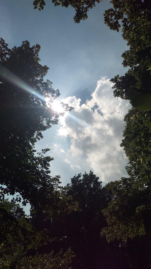 Sun nature royalty free stock image