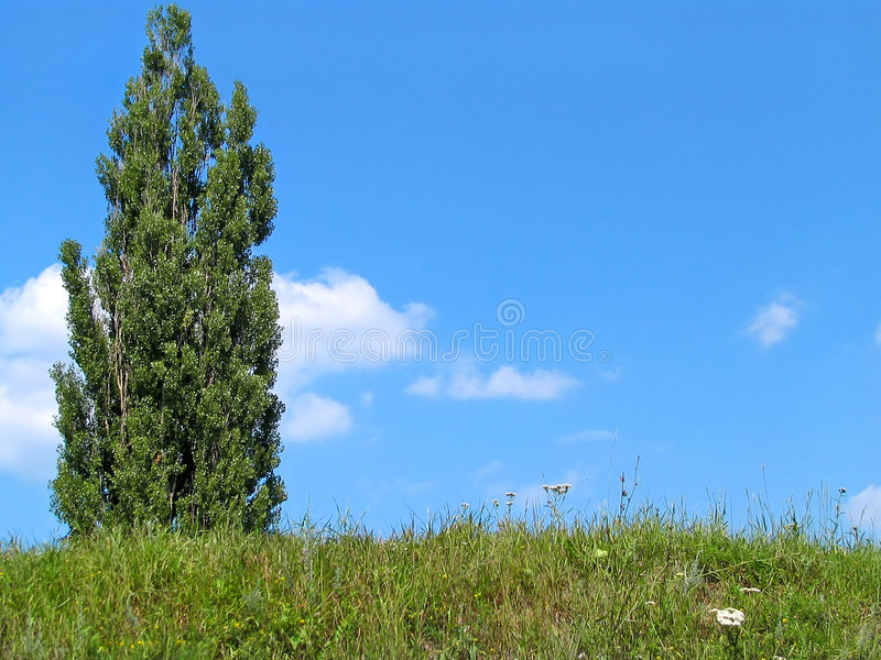 Download Sky and tree stock image. Image of hill, mountain, landscape - 177411