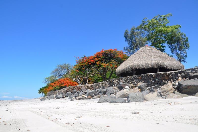 Sky, Tree, Beach, Vacation royalty free stock photos