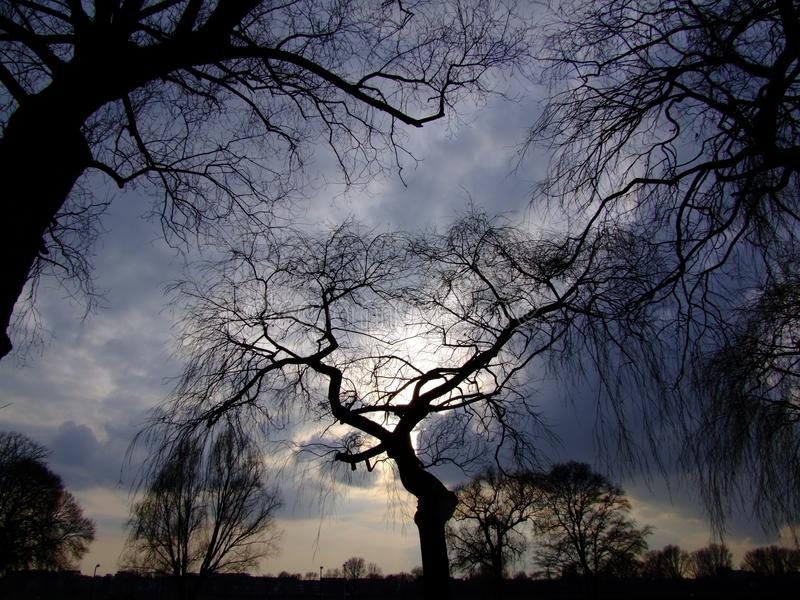 Sky, Tree, Branch, Nature stock photos