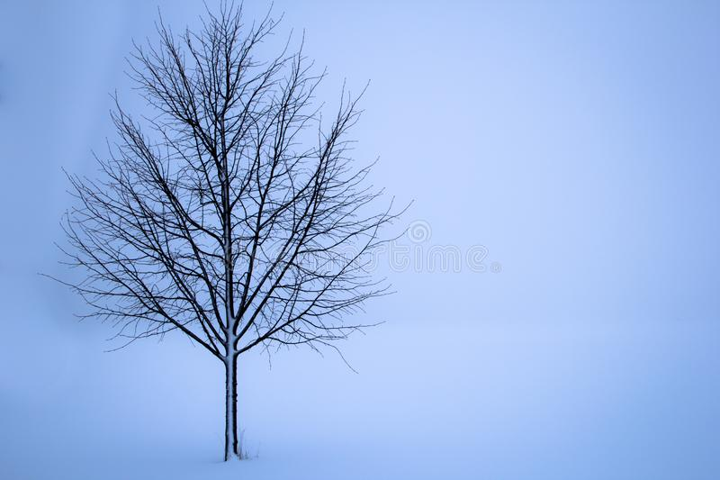 Sky, Tree, Branch, Woody Plant royalty free stock photo