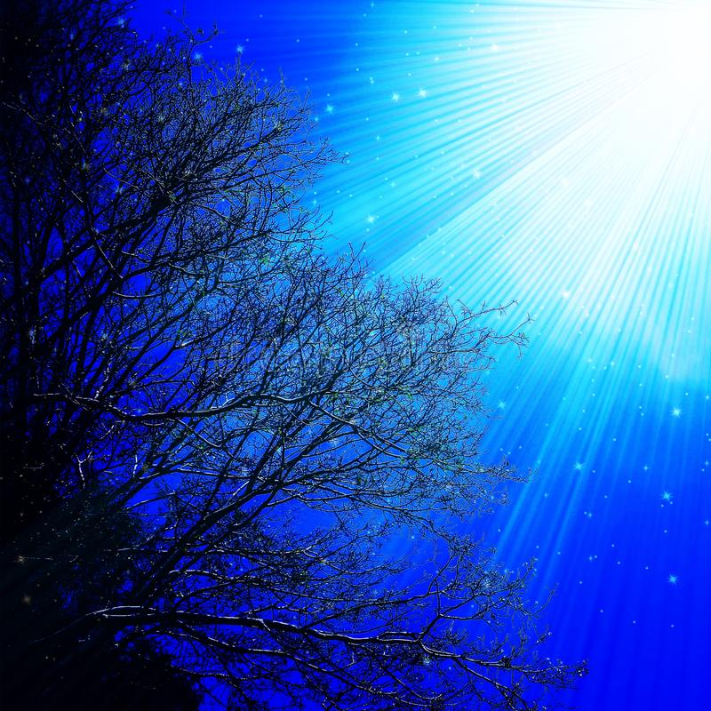 Sky Tree Branches Light Rays Illustration stock illustration