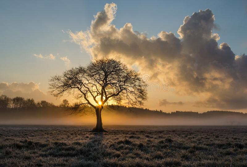 Sky, Tree, Dawn, Morning royalty free stock photos