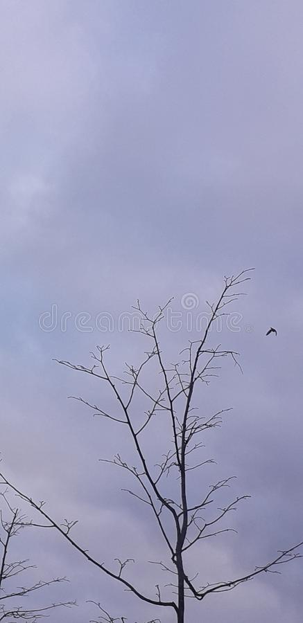 Sky3. Sky tree day grass nice sky3 royalty free stock photography