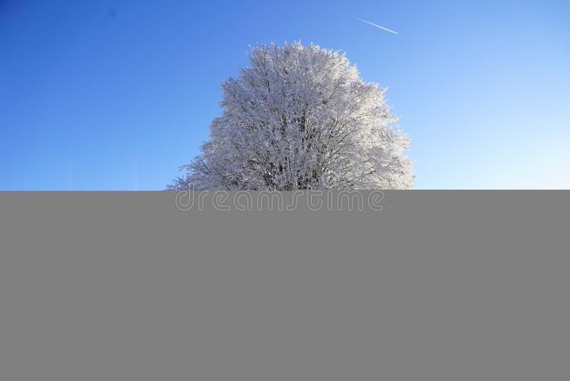 Sky, Tree, Daytime, Cloud royalty free stock photo